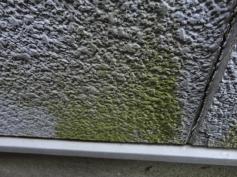 塗装外壁 雨漏り修繕 岡崎塗替え