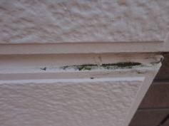 外壁 カビ コケ 藻