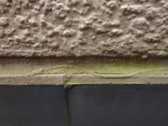 カビ コケ 外壁劣化