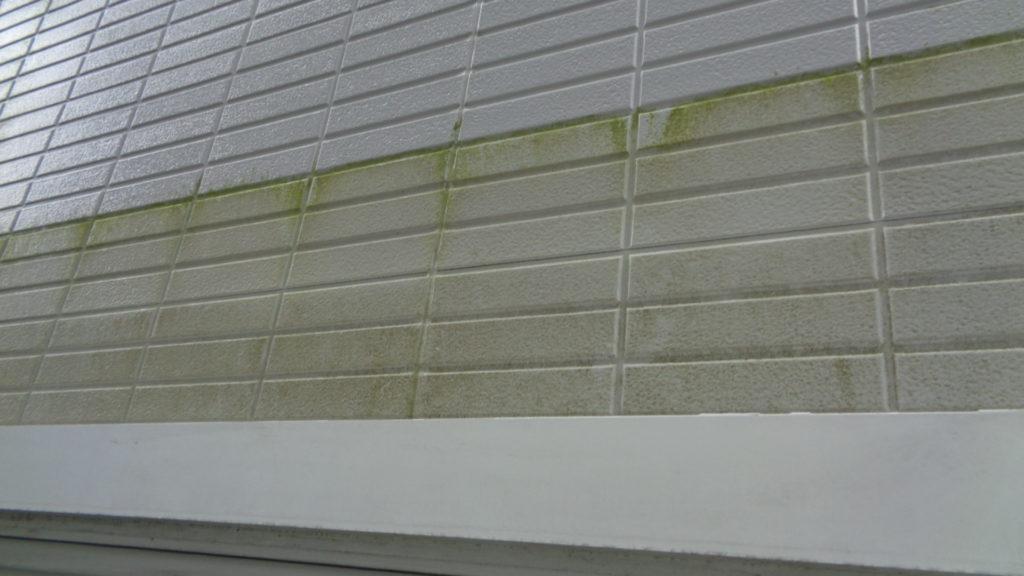 外壁にカビ・コケの発生が見受けられます。