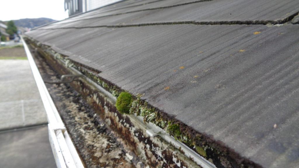 屋根に藻カビ・コケ・藻の発生が見受けられます。