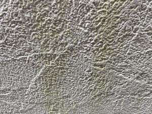 【外壁】コケ・カビ・藻の発生